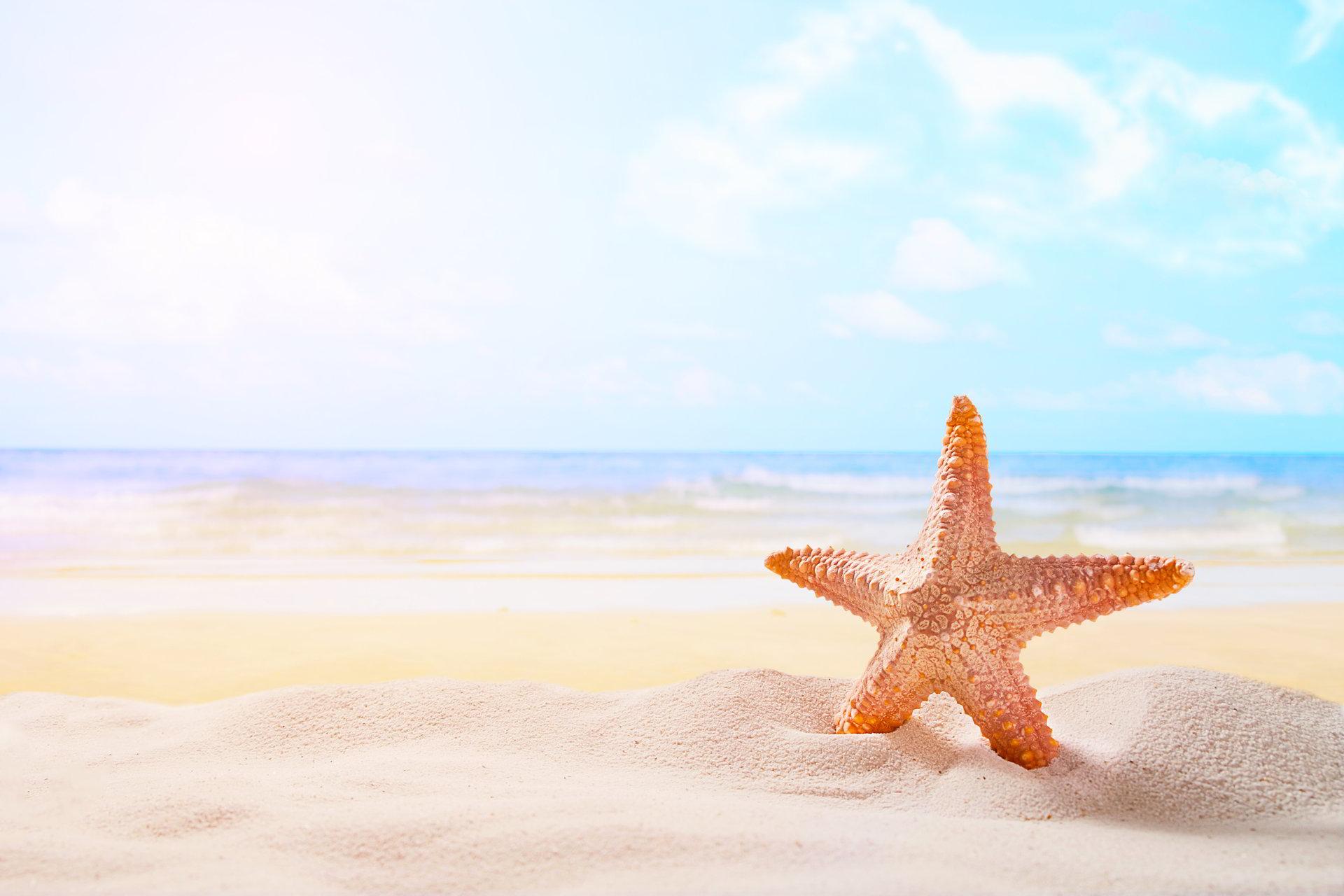 hình ảnh sao biển đẹp