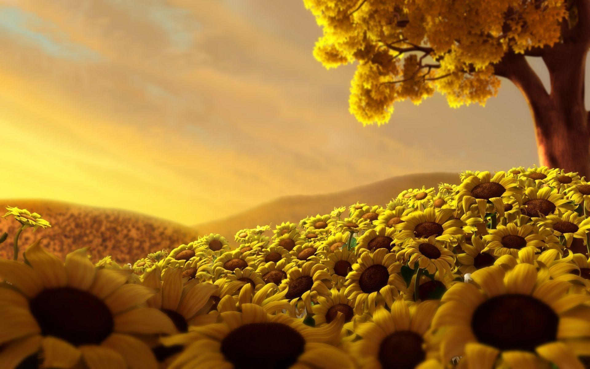 hinh nen hoa huong duong 25