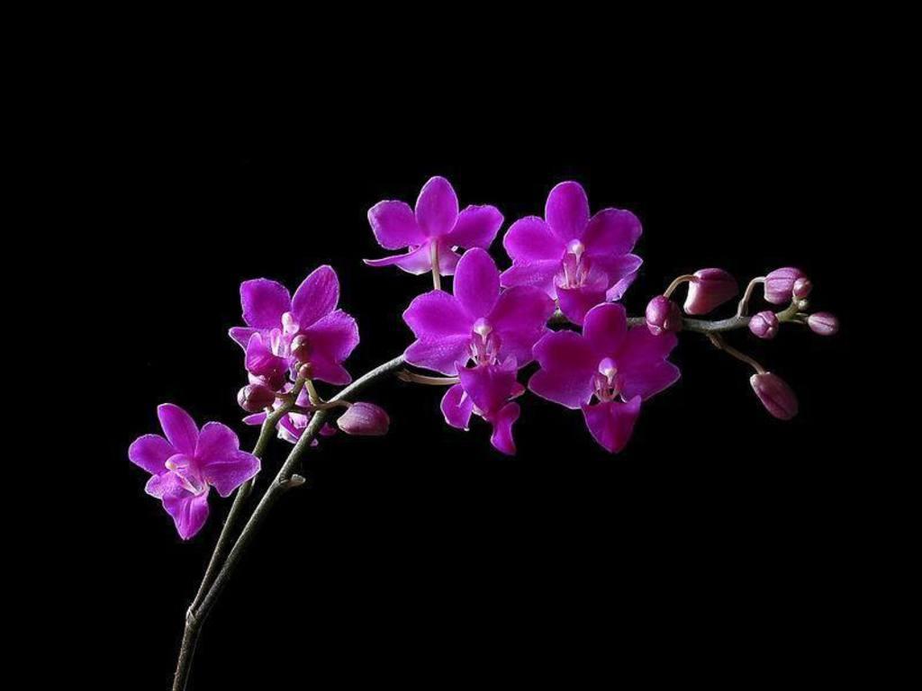 hinh nen hoa lan dep 10