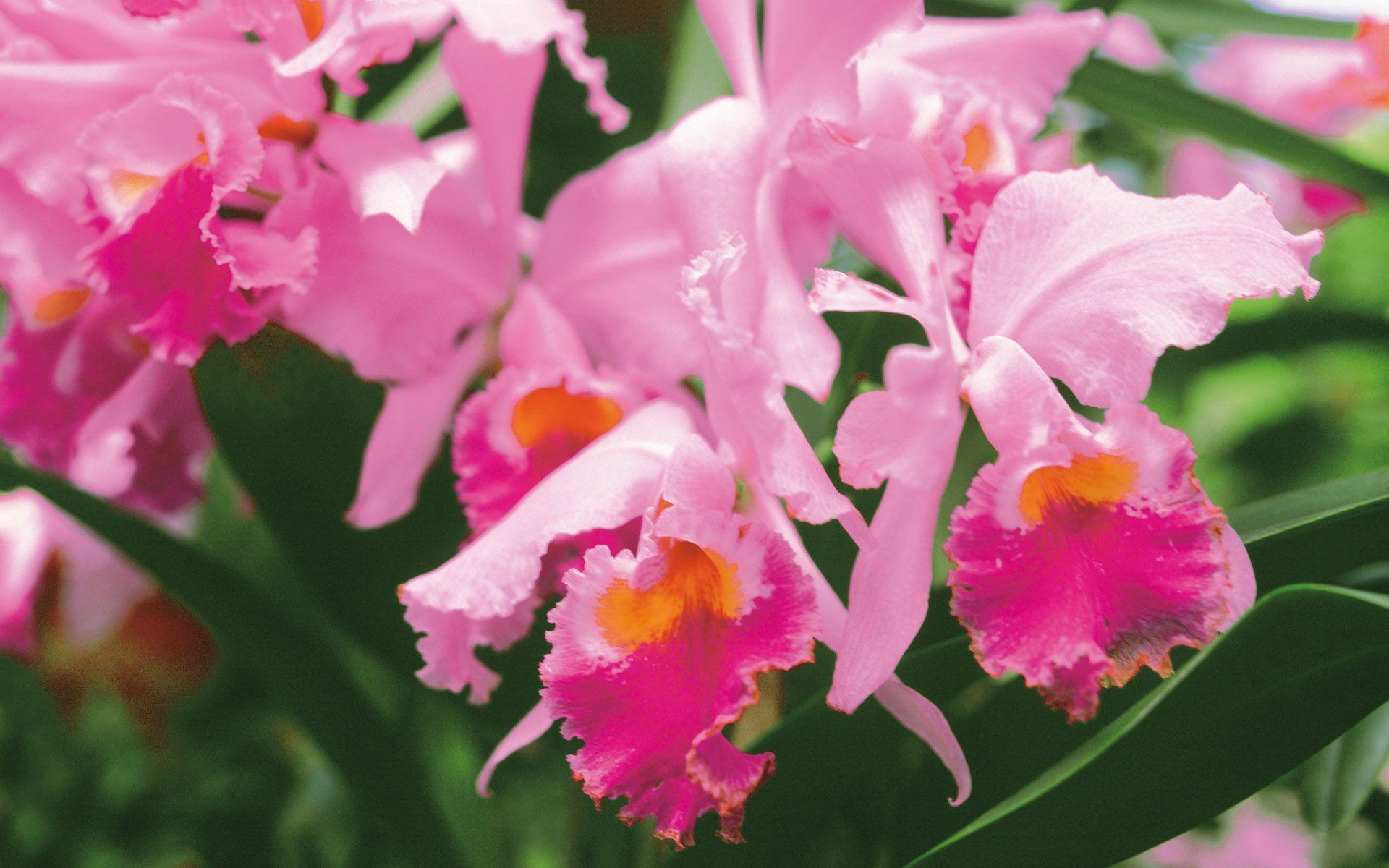 hinh nen hoa lan dep 11