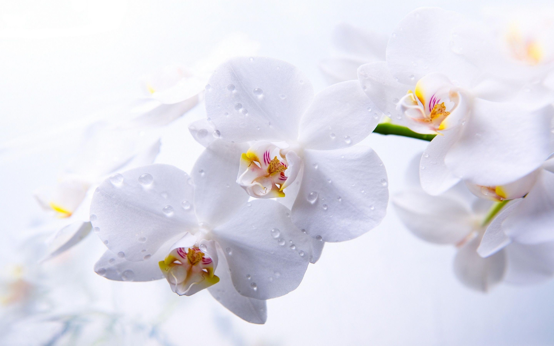 hinh nen hoa lan dep 14