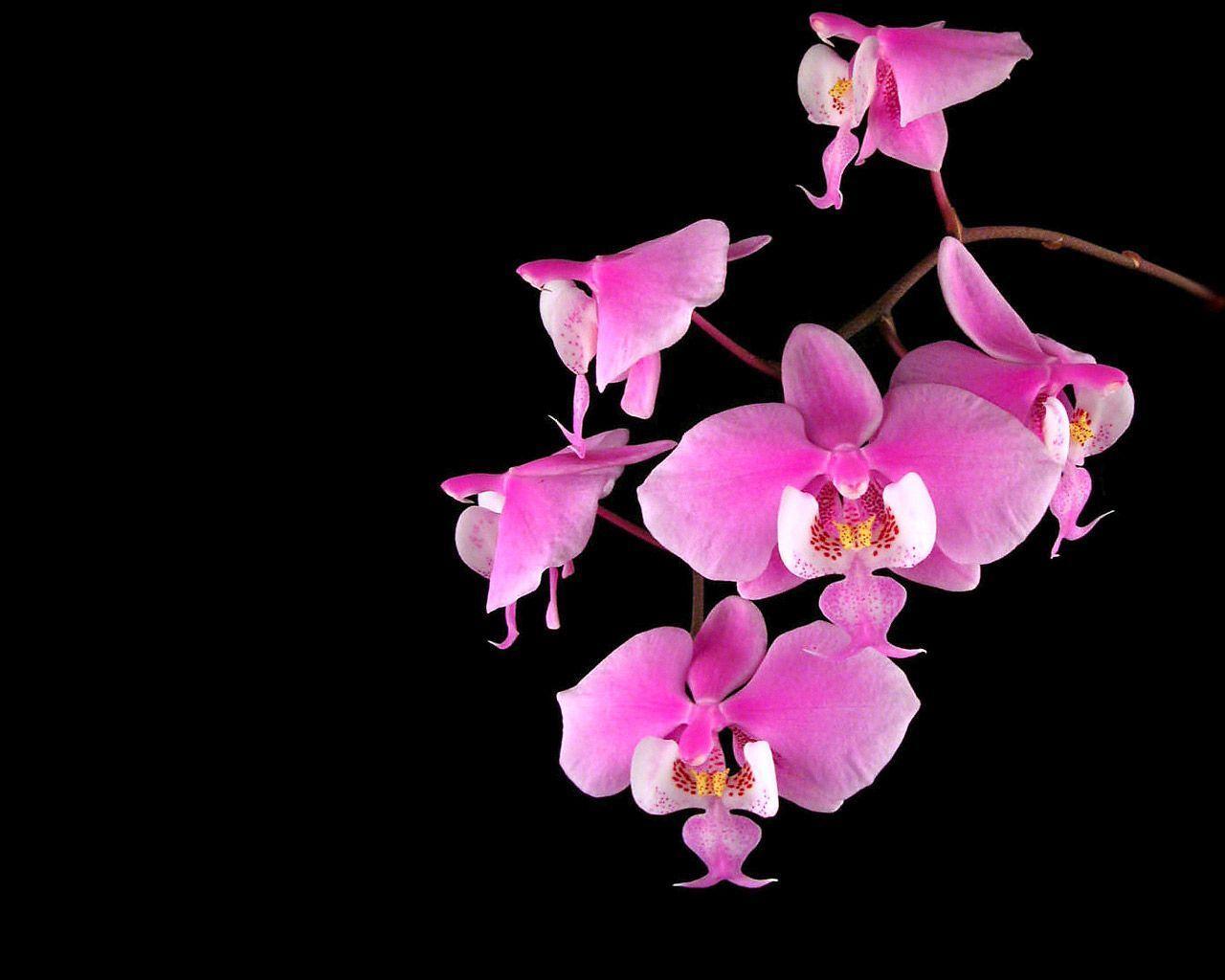 hinh nen hoa lan dep 15