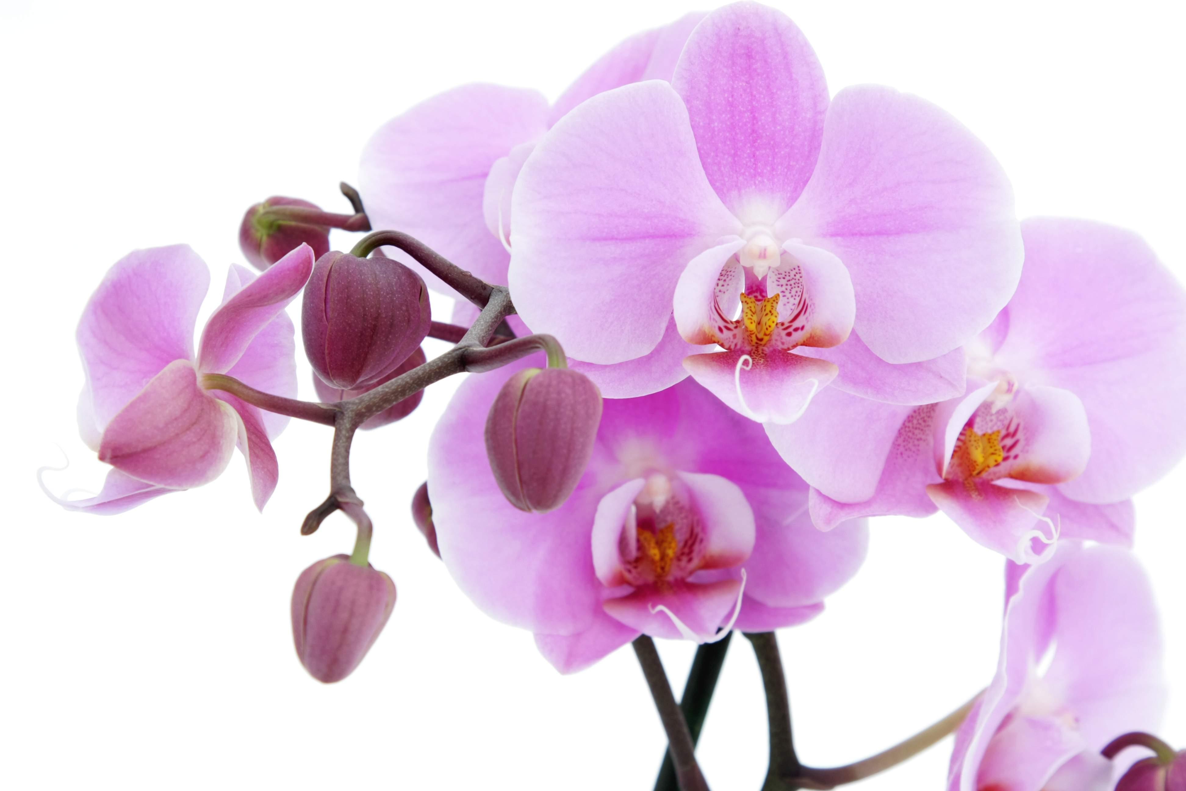 hinh nen hoa lan dep 17