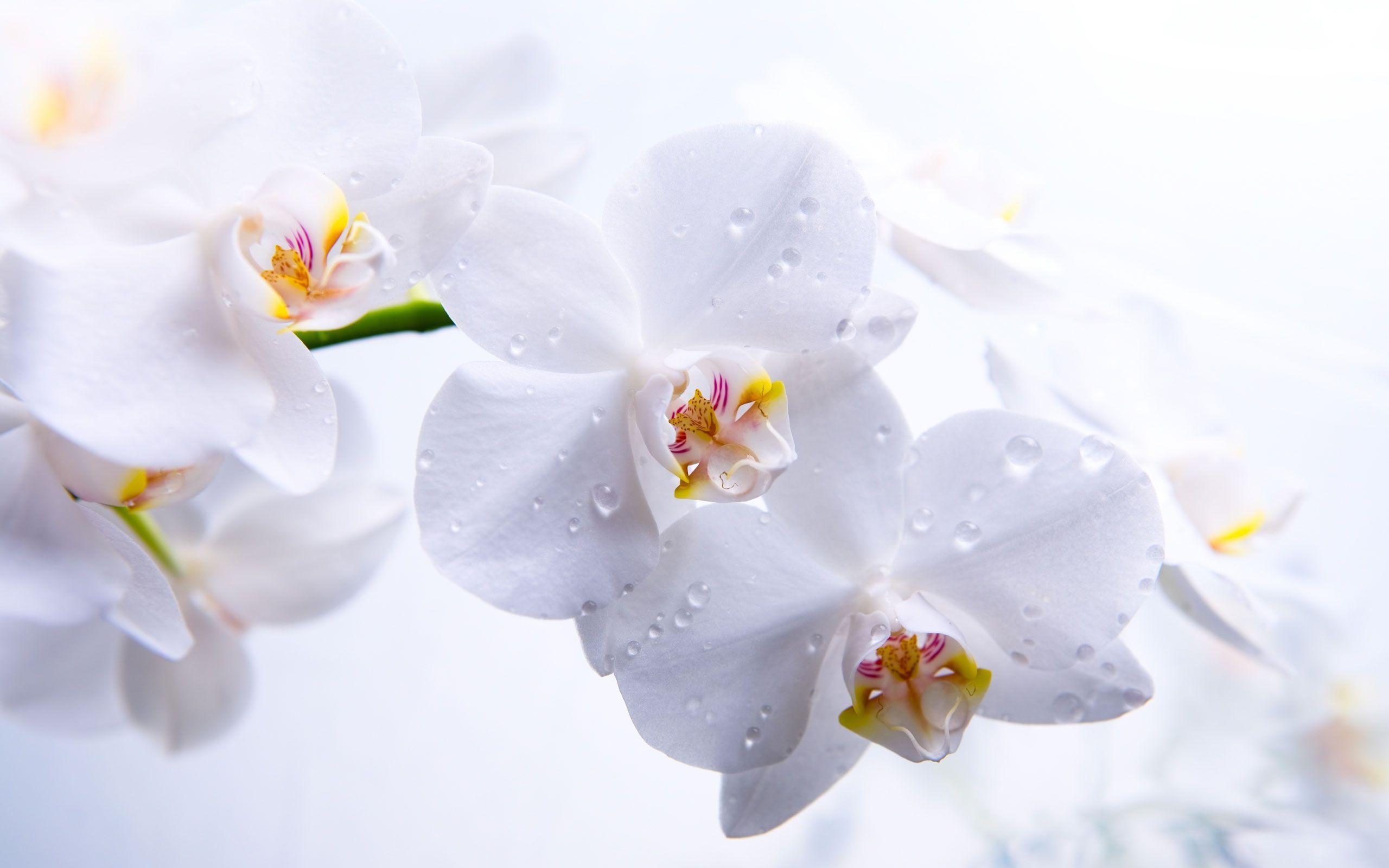 hinh nen hoa lan dep 19