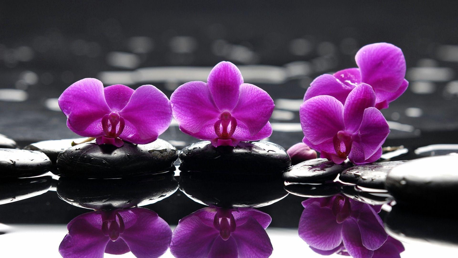 hinh nen hoa lan dep 20
