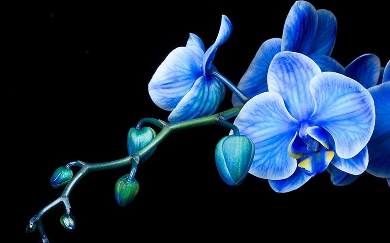 hinh nen hoa lan dep 21
