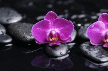 hình nền hoa lan đẹp