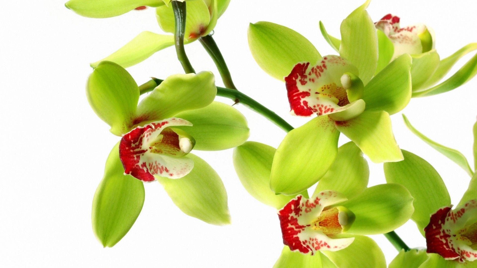 hinh nen hoa lan dep 25