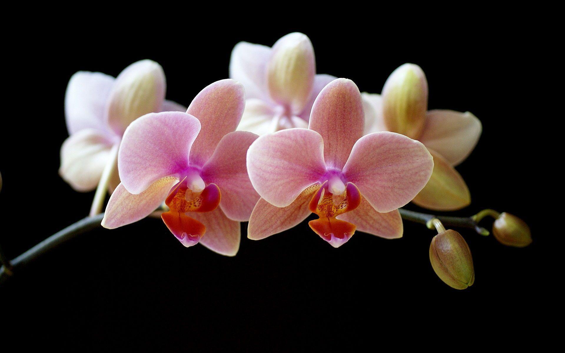 hinh nen hoa lan dep 26