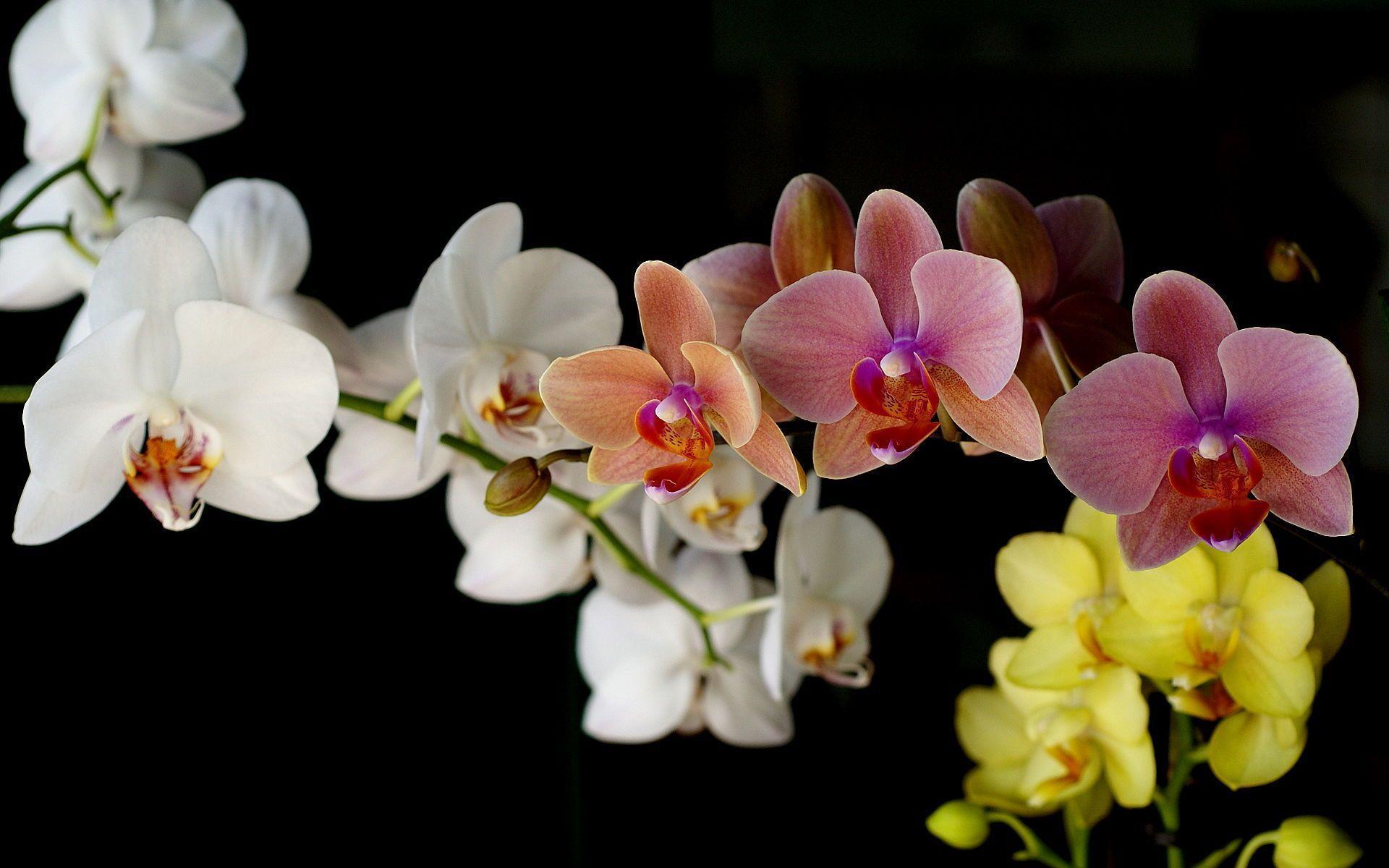 hinh nen hoa lan dep 28