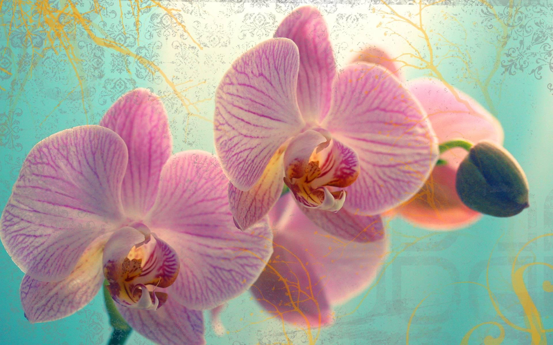 hinh nen hoa lan dep 29