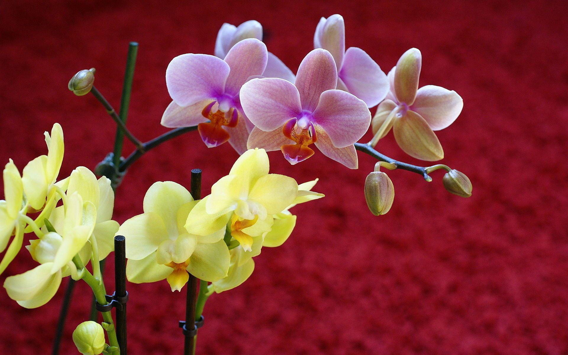 xem ảnh hoa lan đẹp
