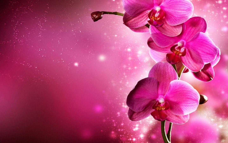 hinh nen hoa lan dep 30