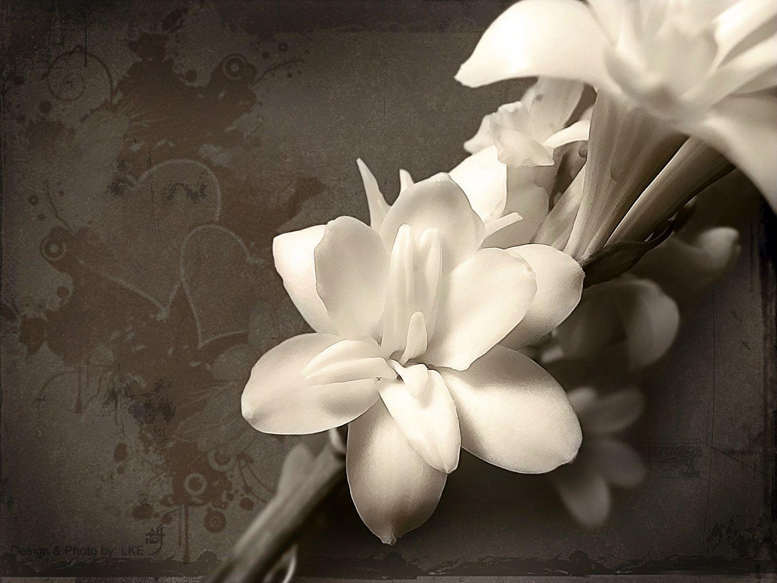 hinh nen hoa lan dep 31
