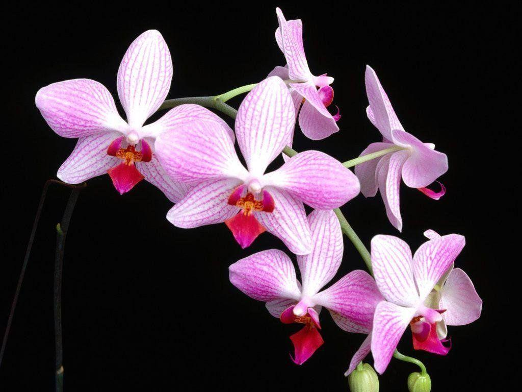 hinh nen hoa lan dep 41
