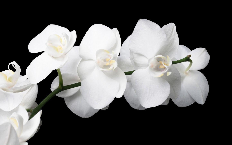 hinh nen hoa lan dep 42