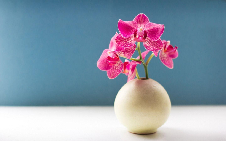 hinh nen hoa lan dep 44