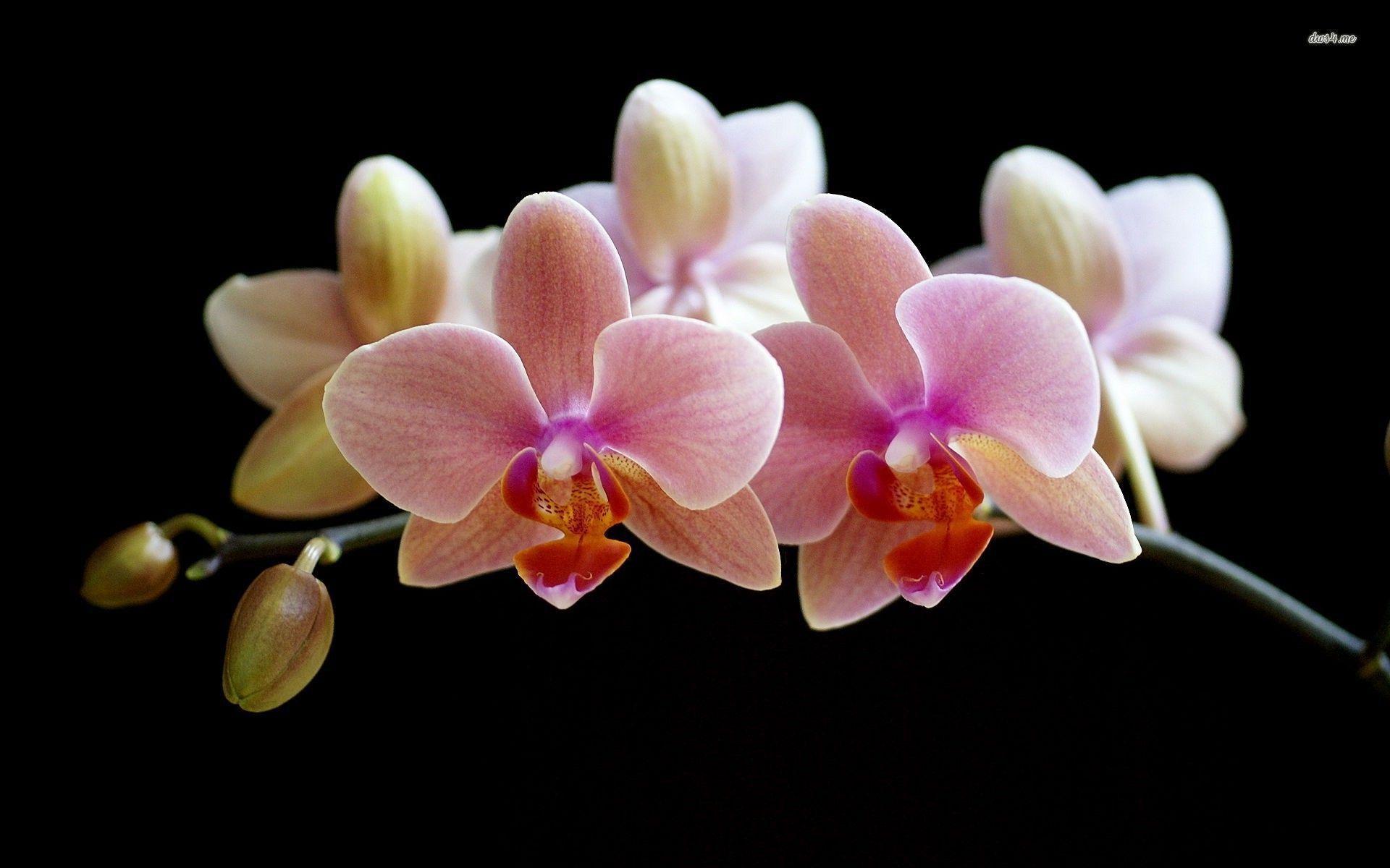 hinh nen hoa lan dep 47