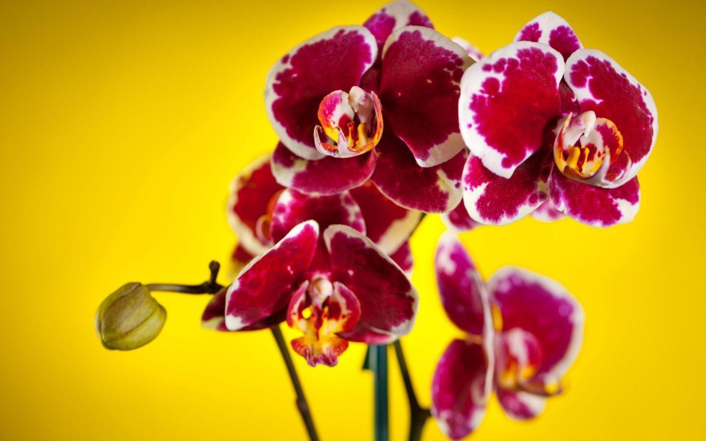 hinh nen hoa lan dep 48