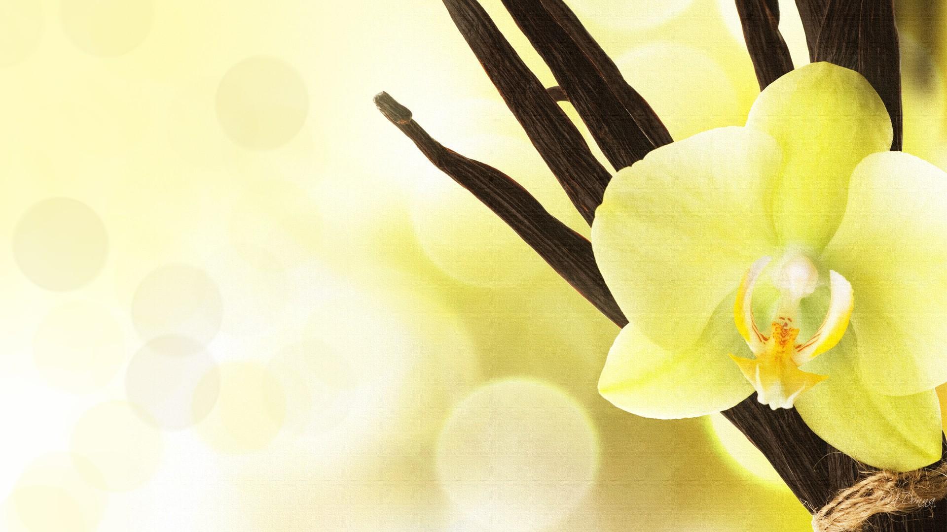 hinh nen hoa lan dep 49