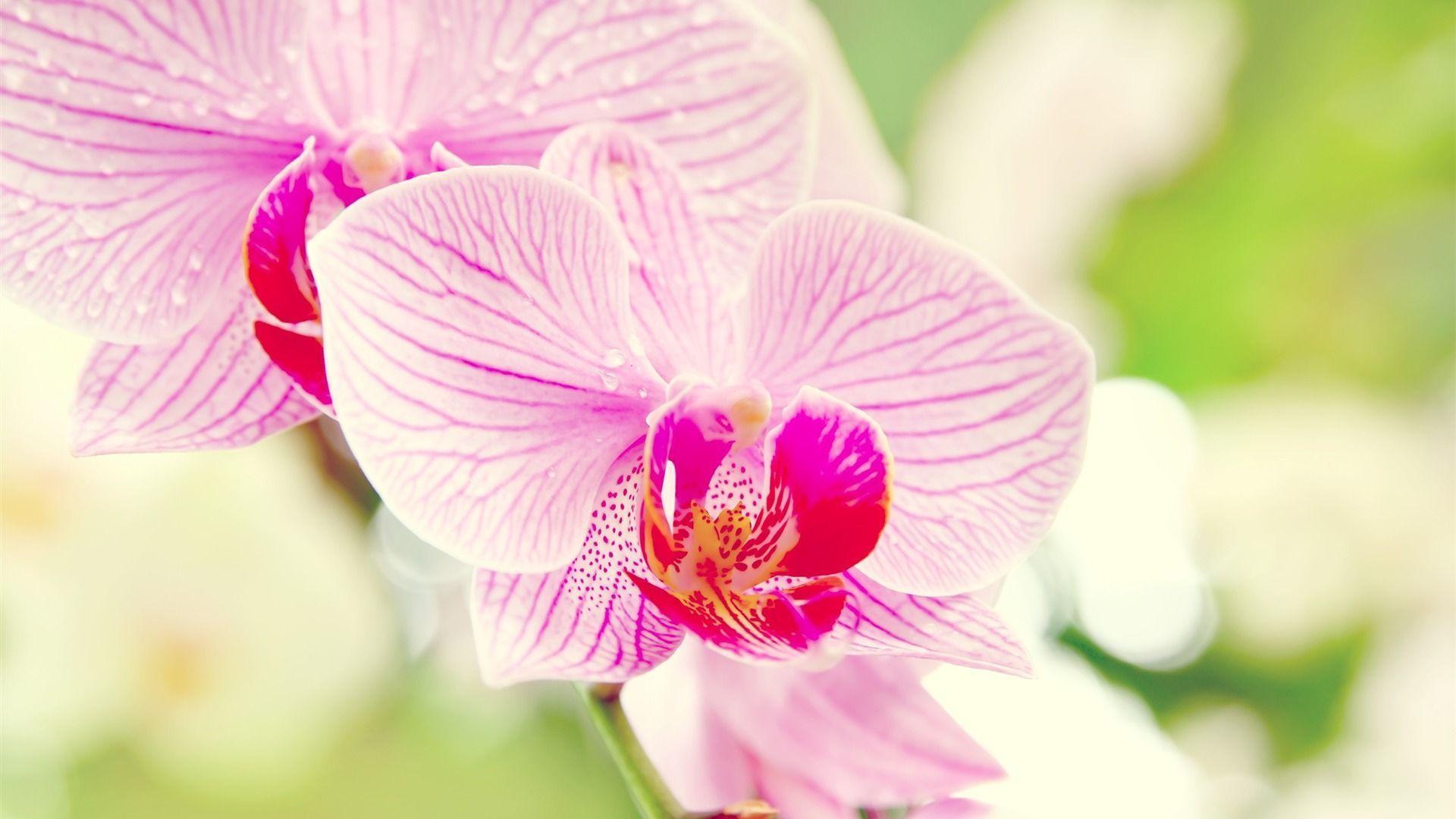hinh nen hoa lan dep 50