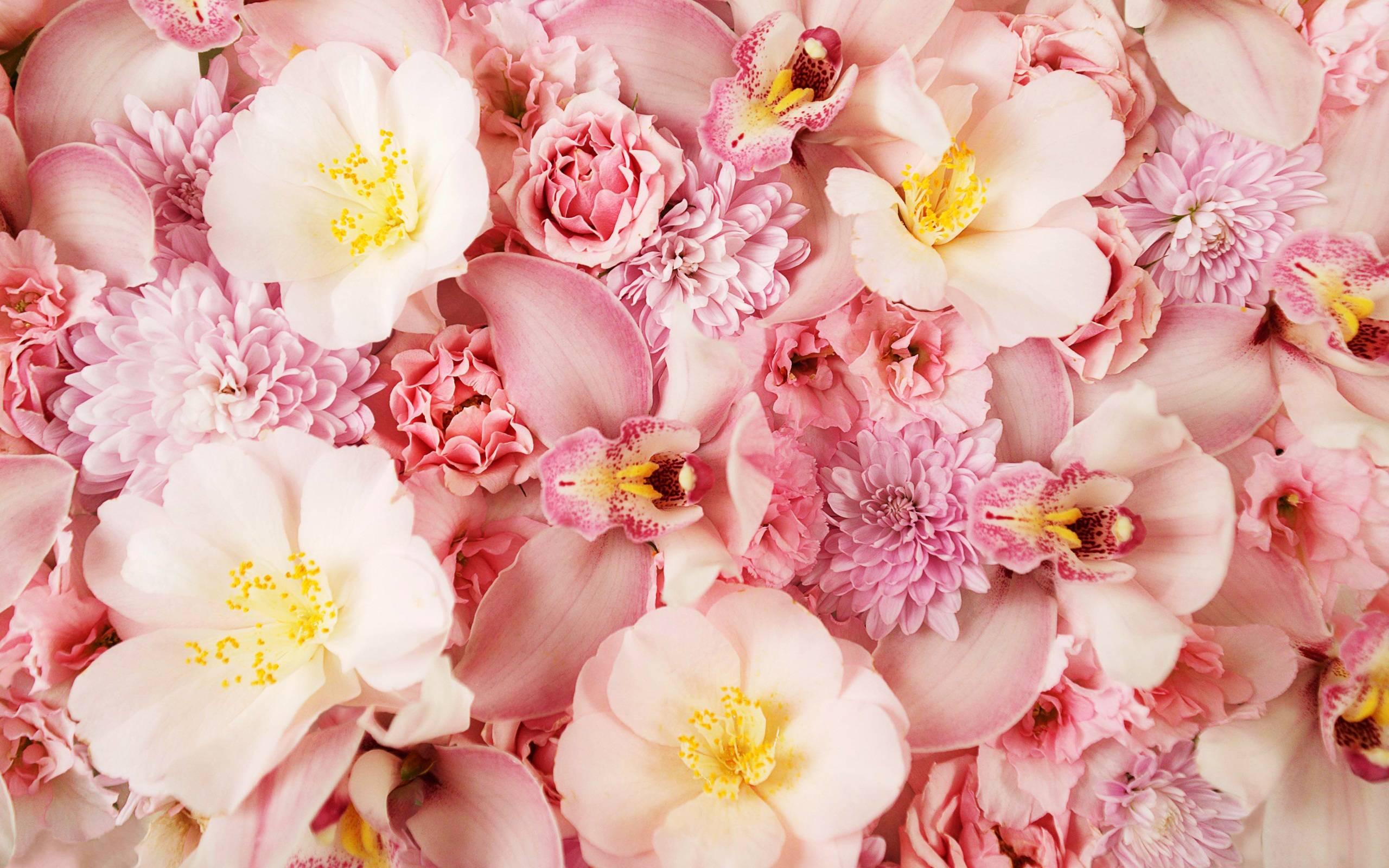 hinh nen hoa lan dep 51