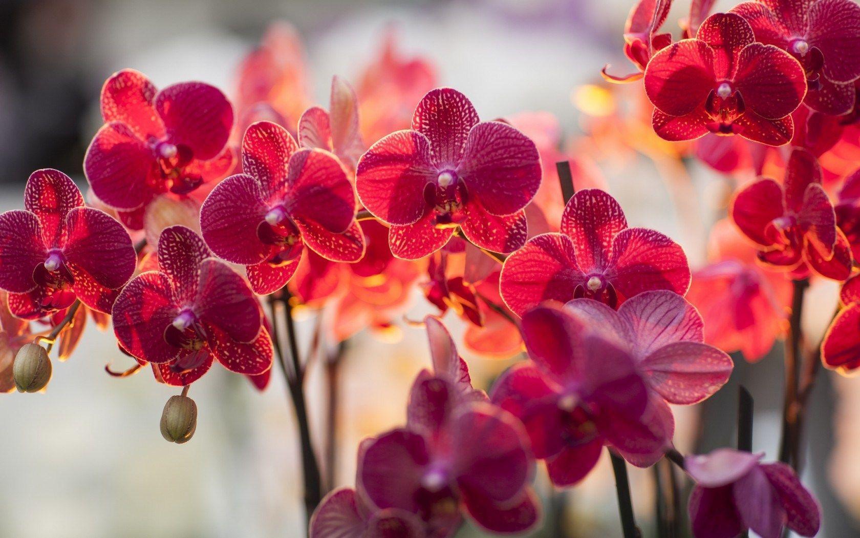 tải ảnh hoa lan đẹp nhất