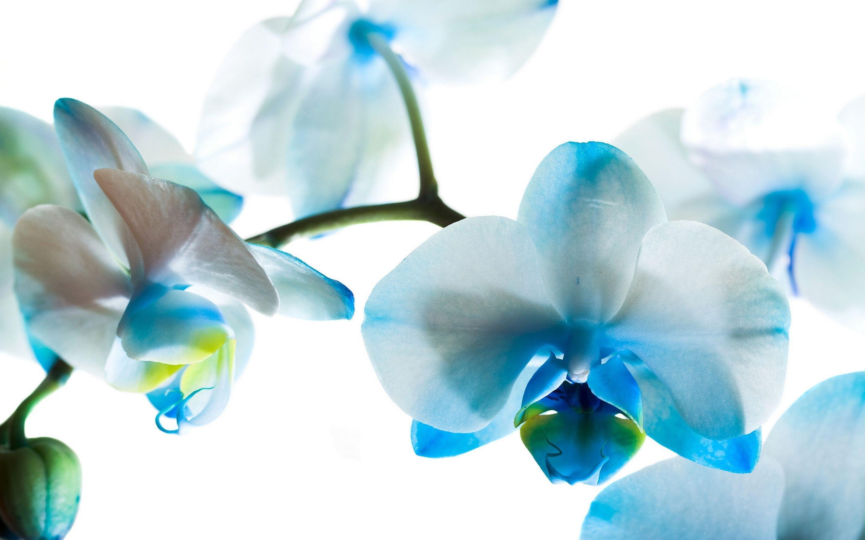 hinh nen hoa lan dep 7