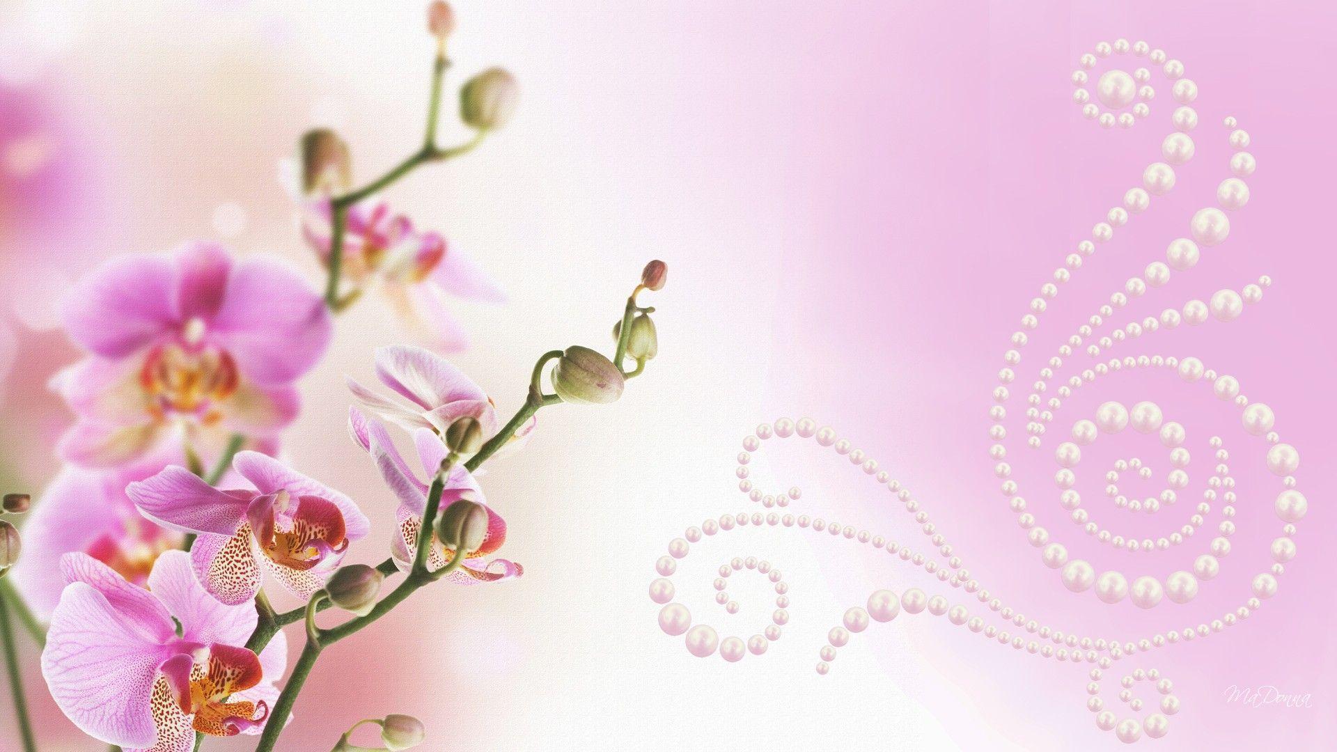 hinh nen hoa lan dep 9