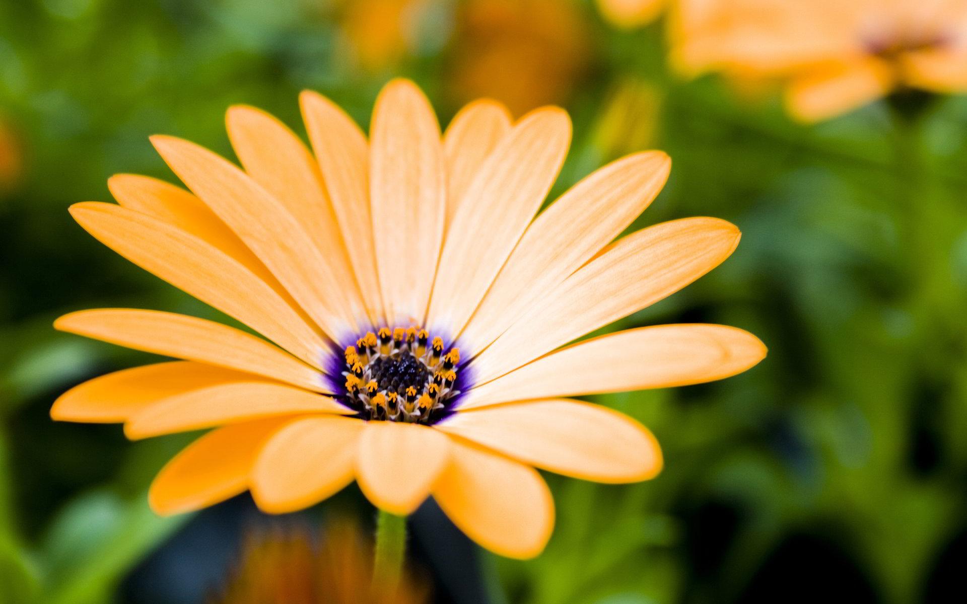 hinh anh hoa cuc dep 2
