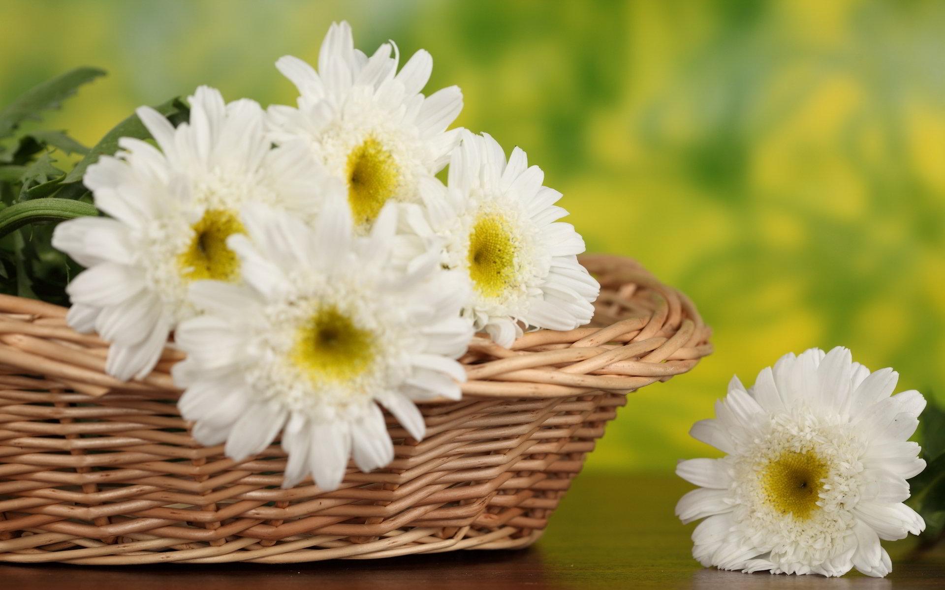 hinh anh hoa cuc dep 30