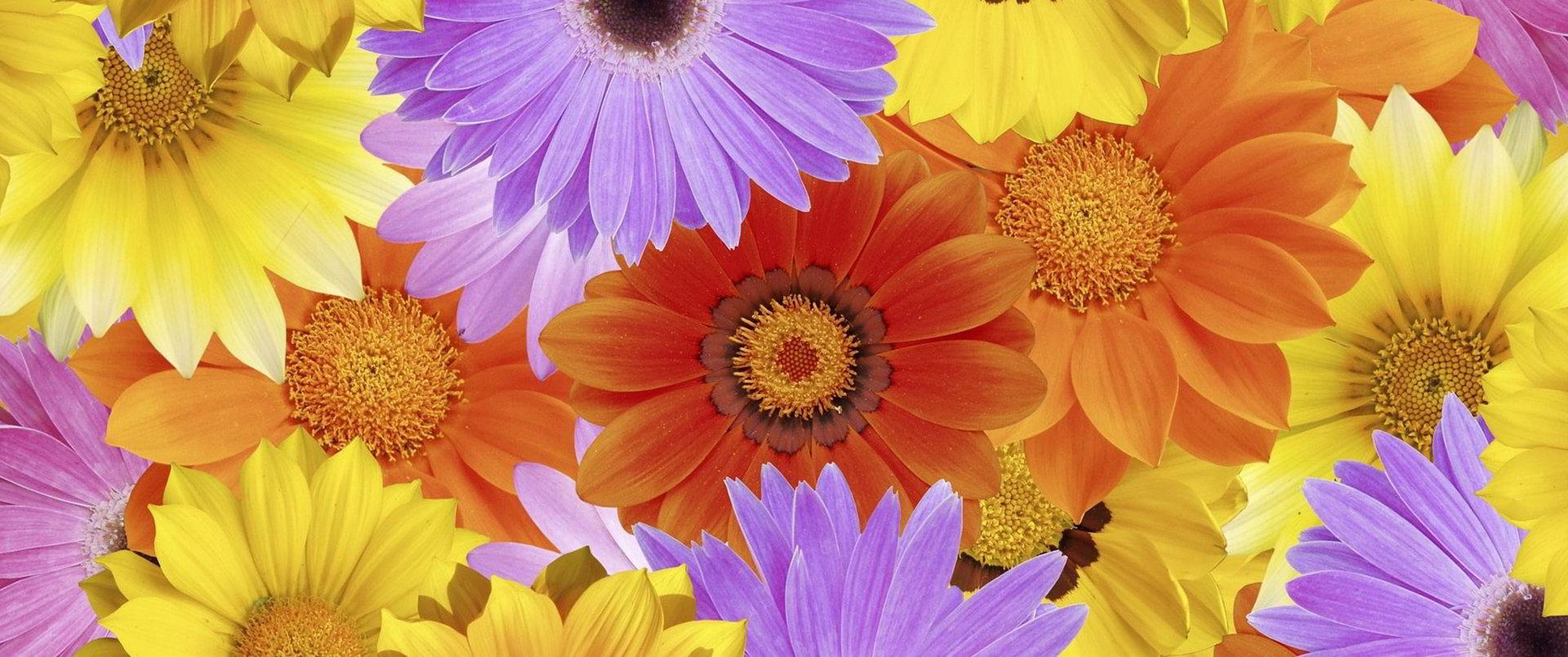 hinh anh hoa cuc dep 52
