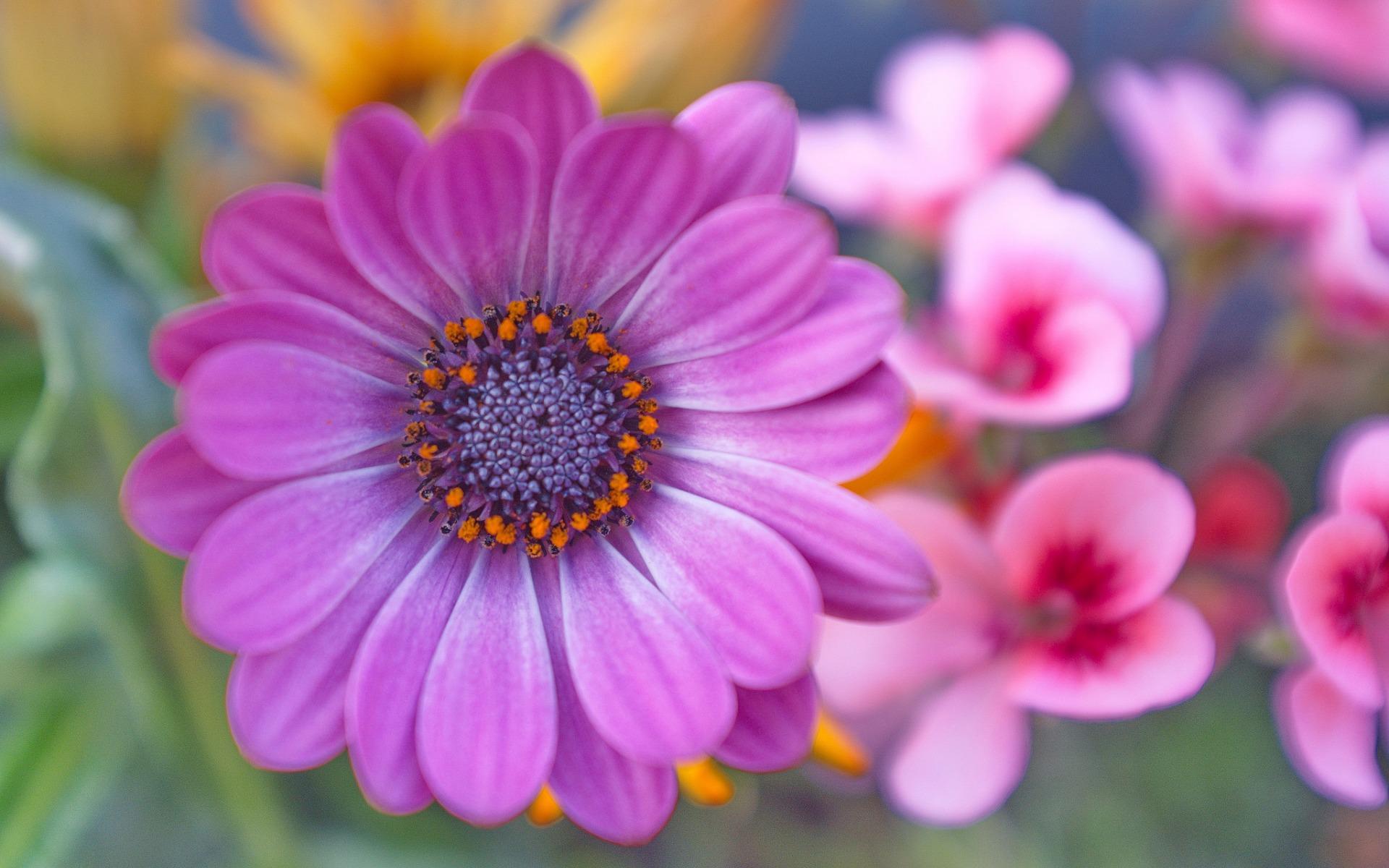 hinh anh hoa cuc dep 54