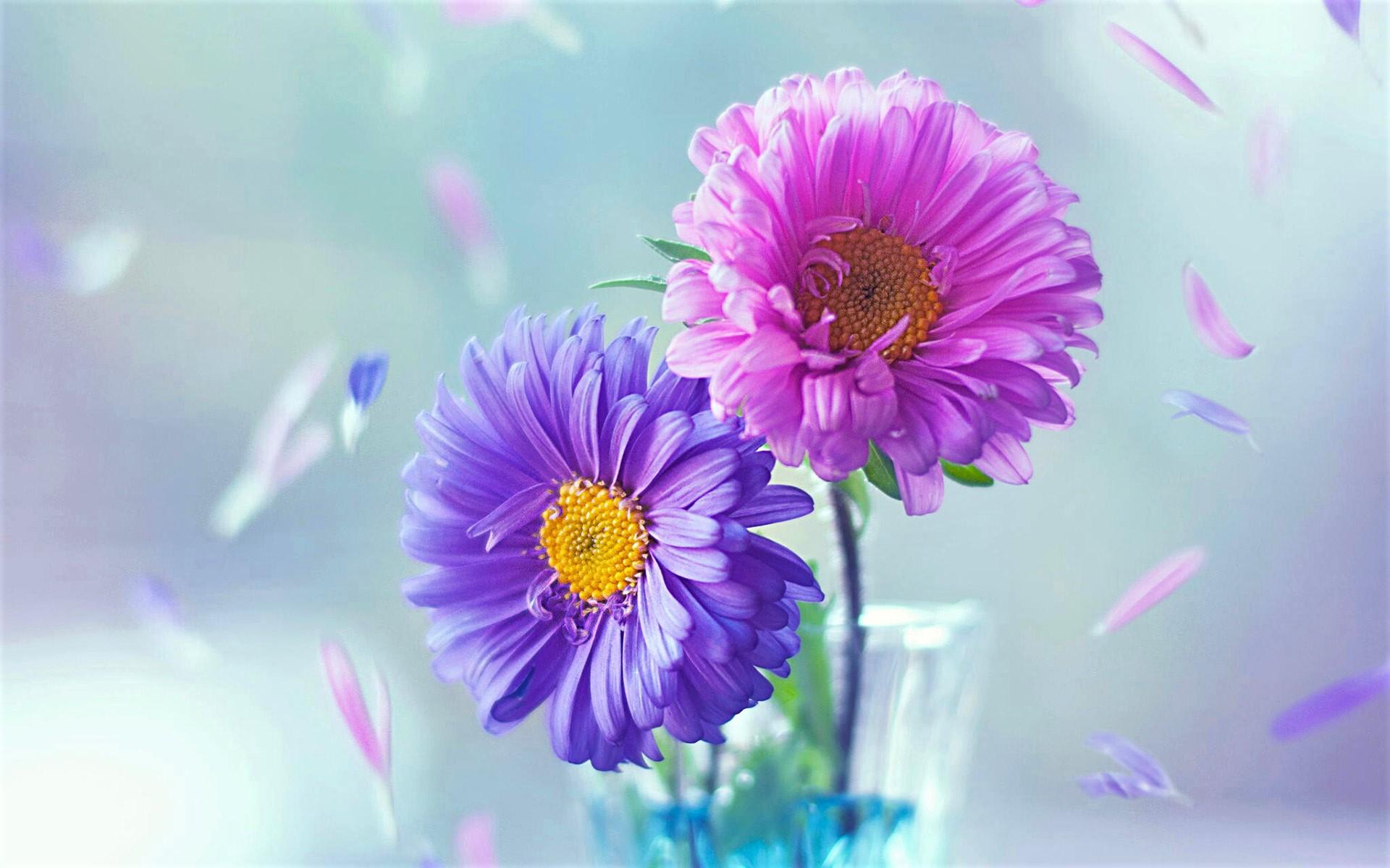hinh anh hoa cuc dep 75