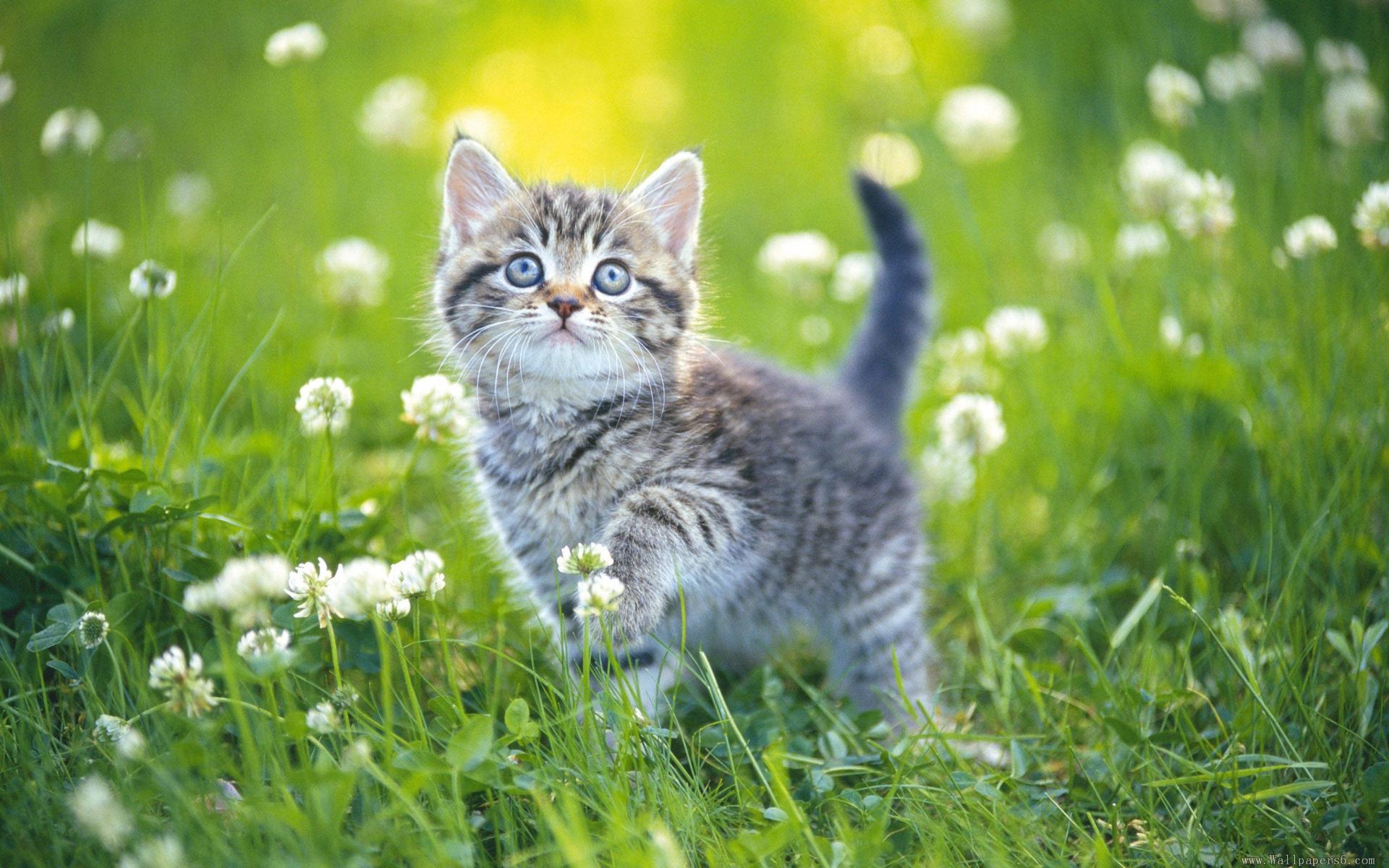 hình nền mèo con