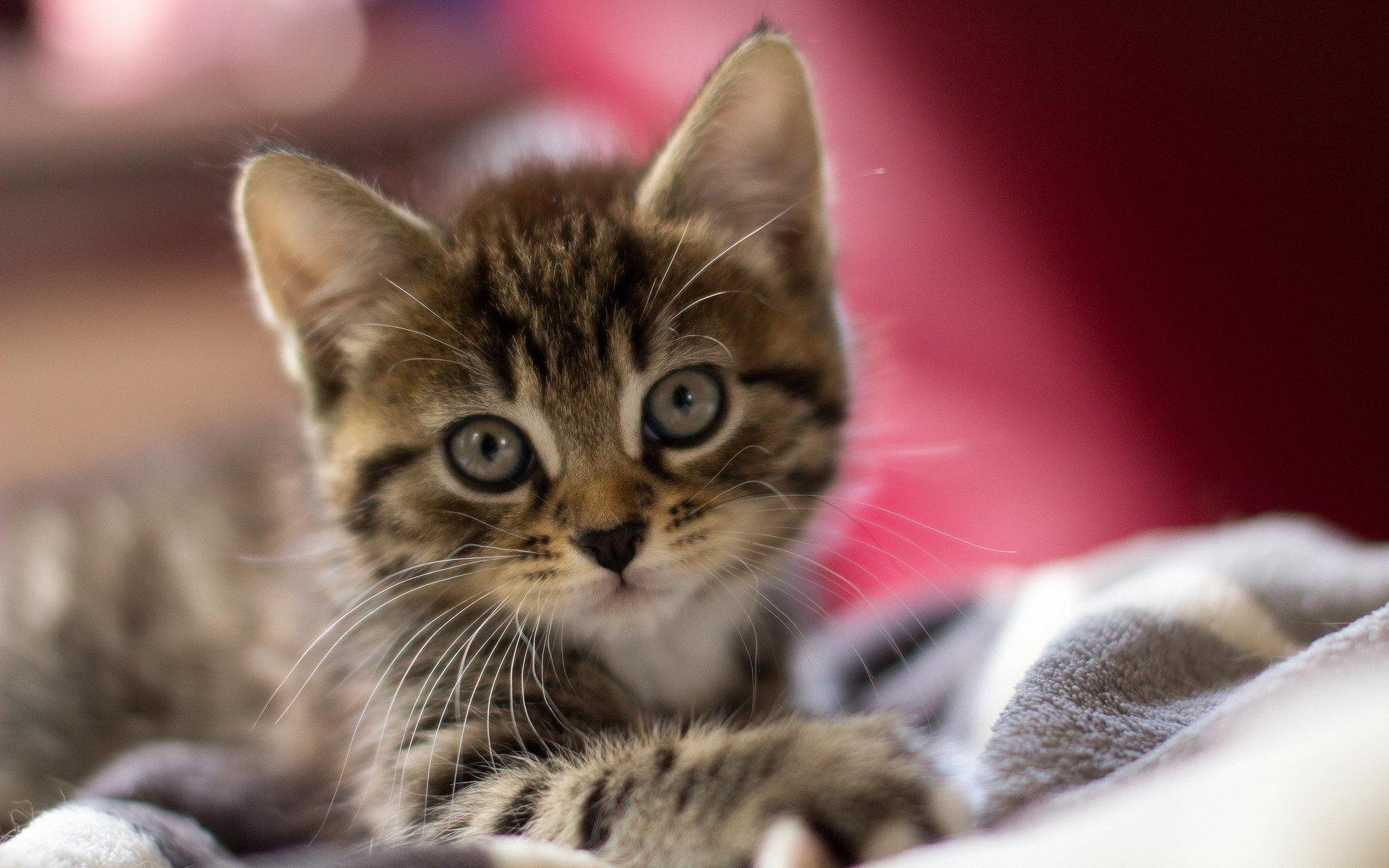 tải ảnh mèo con dễ thương