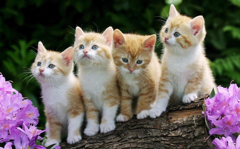 hình mèo đẹp