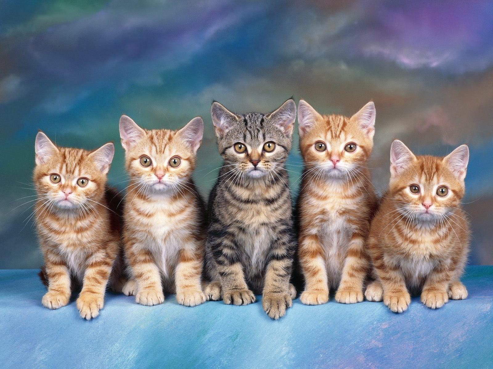 hình nền mèo kute