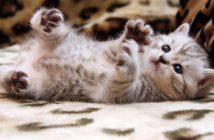 Hình nền mèo con đẹp