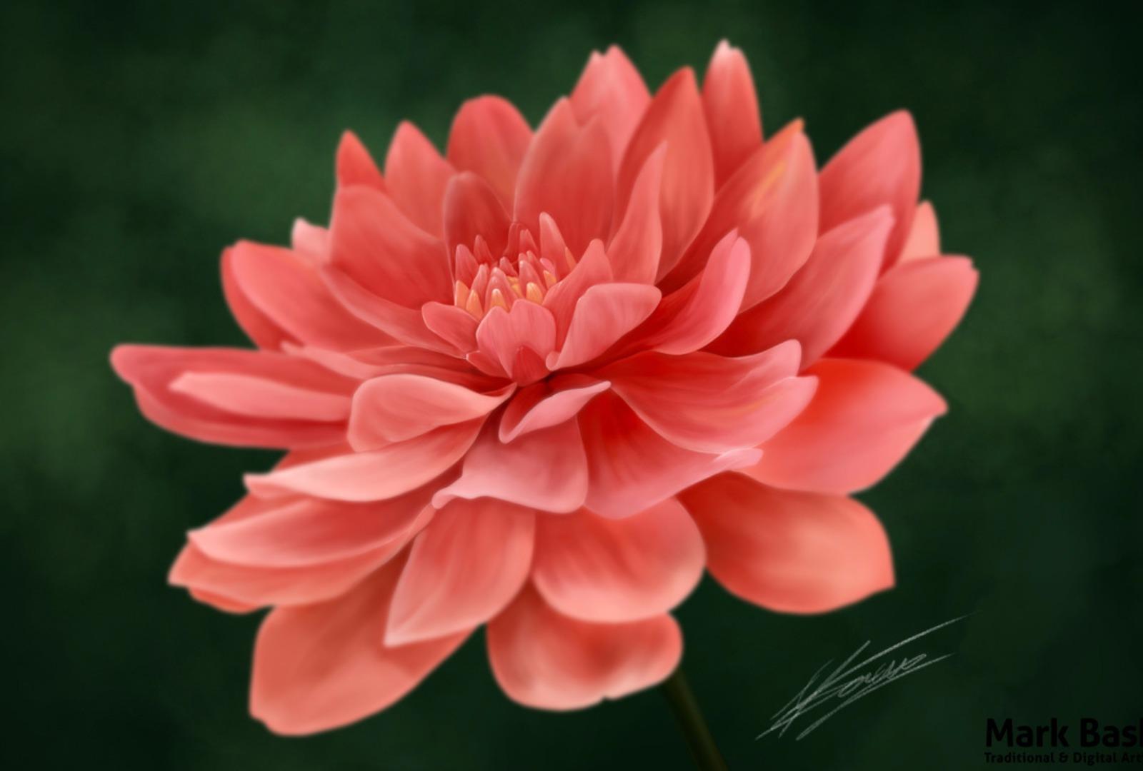 Tải ảnh hoa đẹp nhất thế giới về máy tính