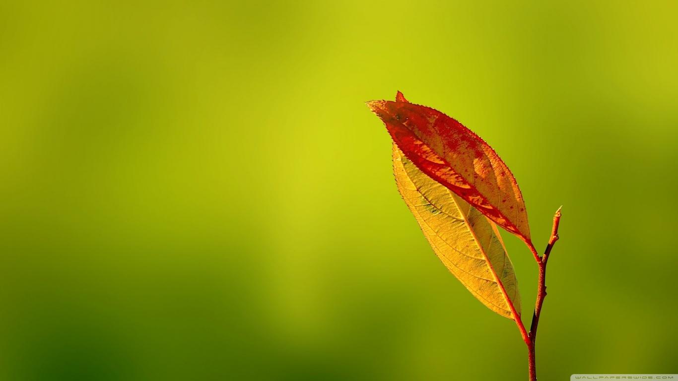tải ảnh đẹp của chiếc lá