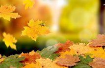 hình ảnh đẹp của chiếc lá