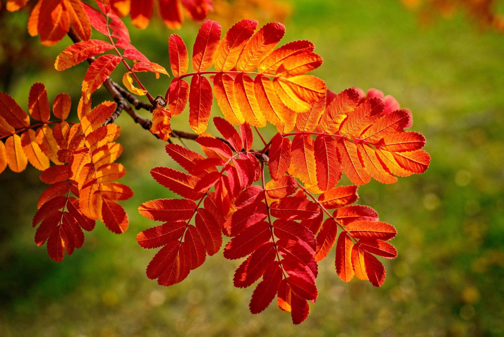 tải ảnh nền đẹp của chiếc lá