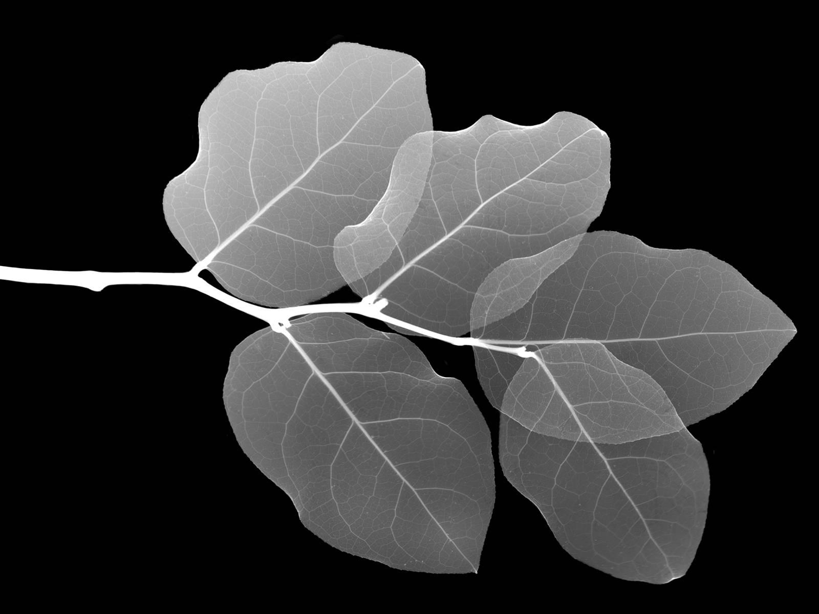 hình ảnh chiếc lá đẹp nhất