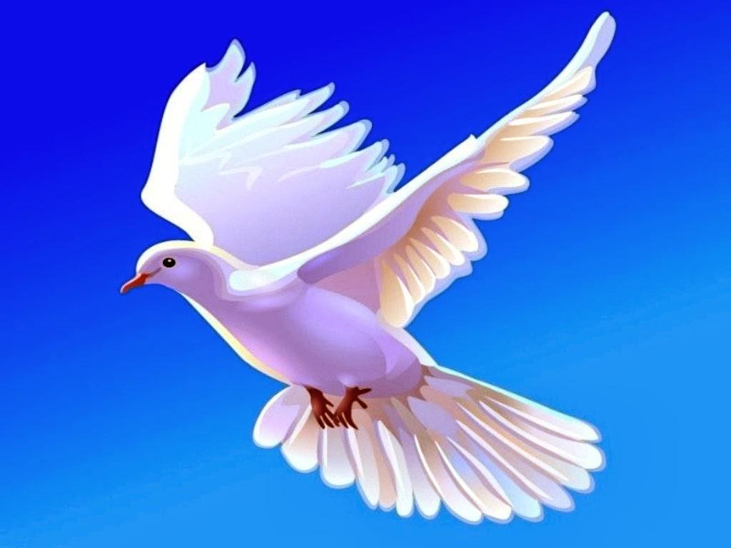 hình ảnh chim bồ câu
