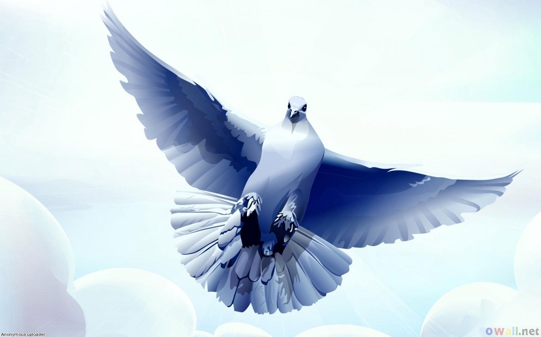 tải hình ảnh chim bồ câu đẹp