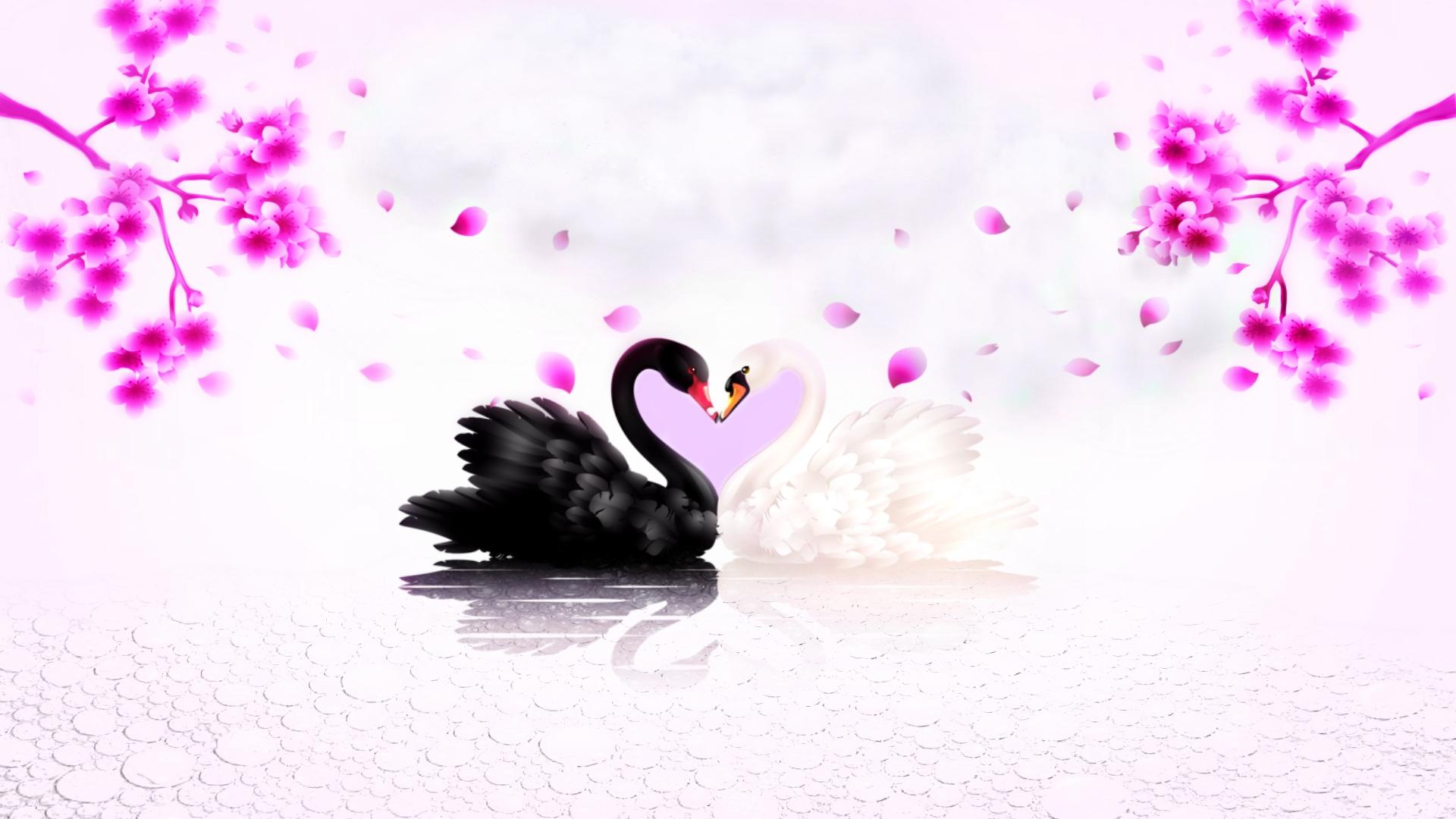 hình ảnh chim thiên nga