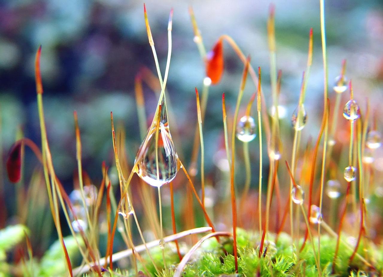 hình nền giọt nước full hd đẹp