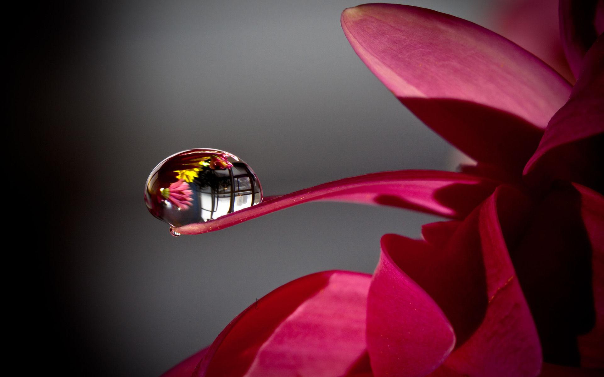 hình ảnh giọt nước trên lá đẹp