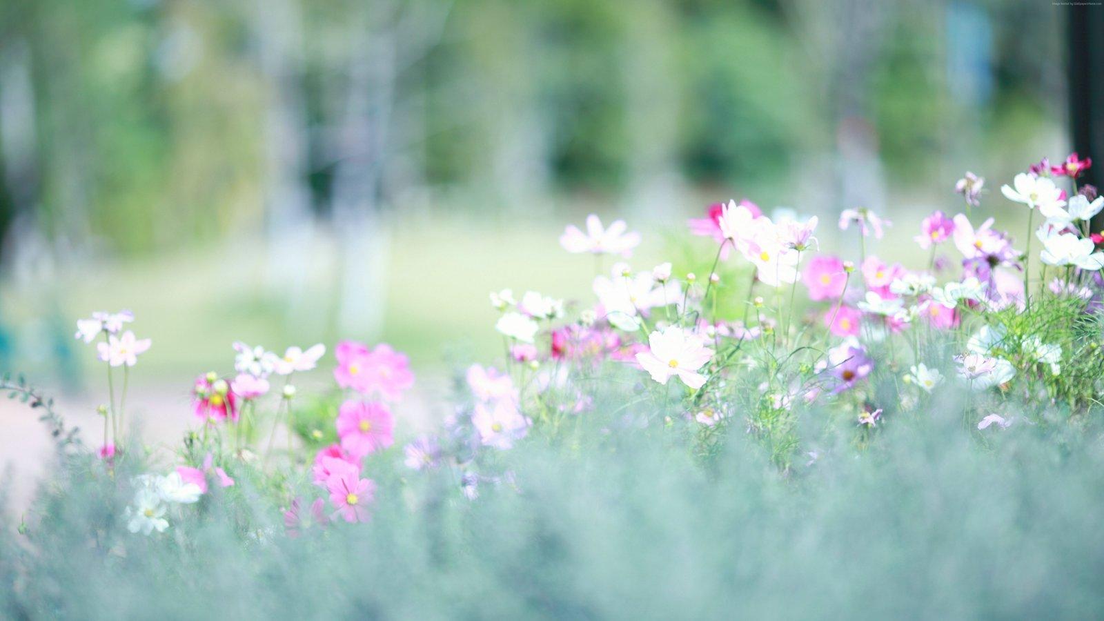 hình ảnh hoa dại